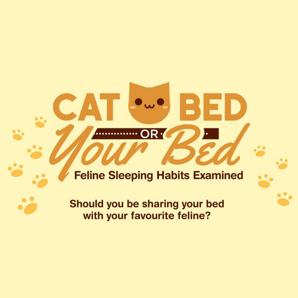 Cat Bed Or Your Bed